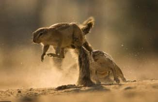 охота на суслика